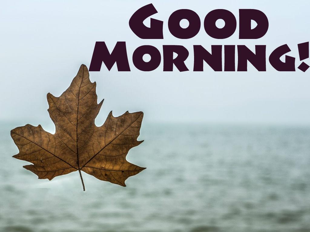 Guten Morgen Liebesbilder Für Sie Und Ihn Freund